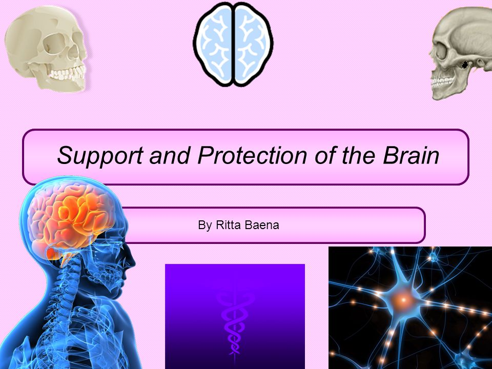 Support and Protection of the Brain