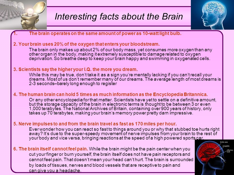 Interesting facts about the Brain