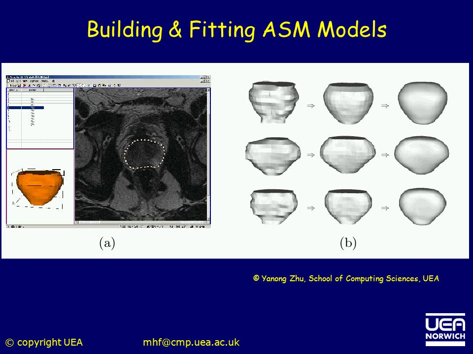 Building & Fitting ASM Models