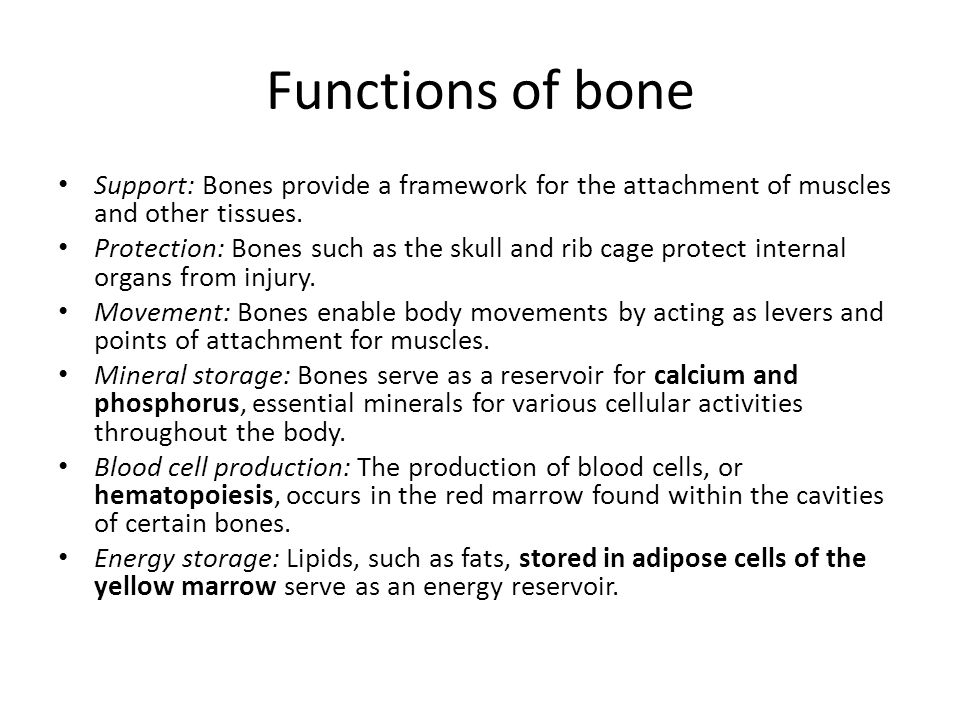 Functions of bone Support: Bones provide a framework for the attachment of muscles and other tissues.