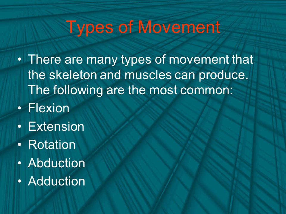 Types of Movement There are many types of movement that the skeleton and muscles can produce. The following are the most common: