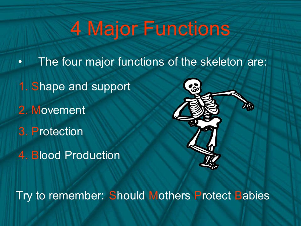 4 Major Functions The four major functions of the skeleton are: