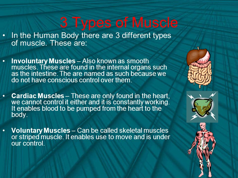 3 Types of Muscle In the Human Body there are 3 different types of muscle. These are: