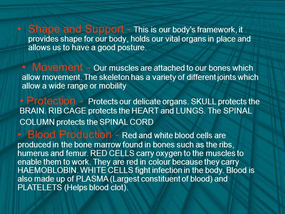 Shape and Support - This is our body s framework, it provides shape for our body, holds our vital organs in place and allows us to have a good posture.