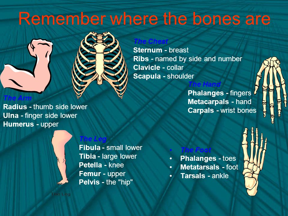 Remember where the bones are
