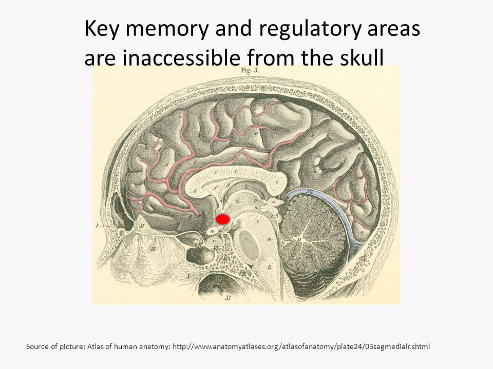 Key memory and regulatory areas are inaccessible from the skull