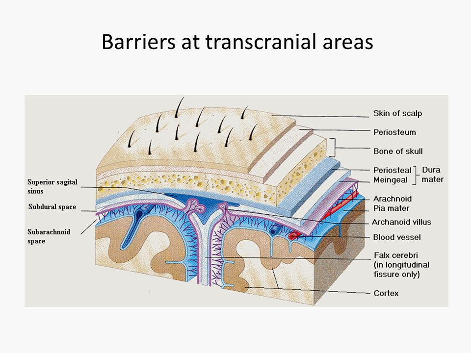 Barriers at transcranial areas