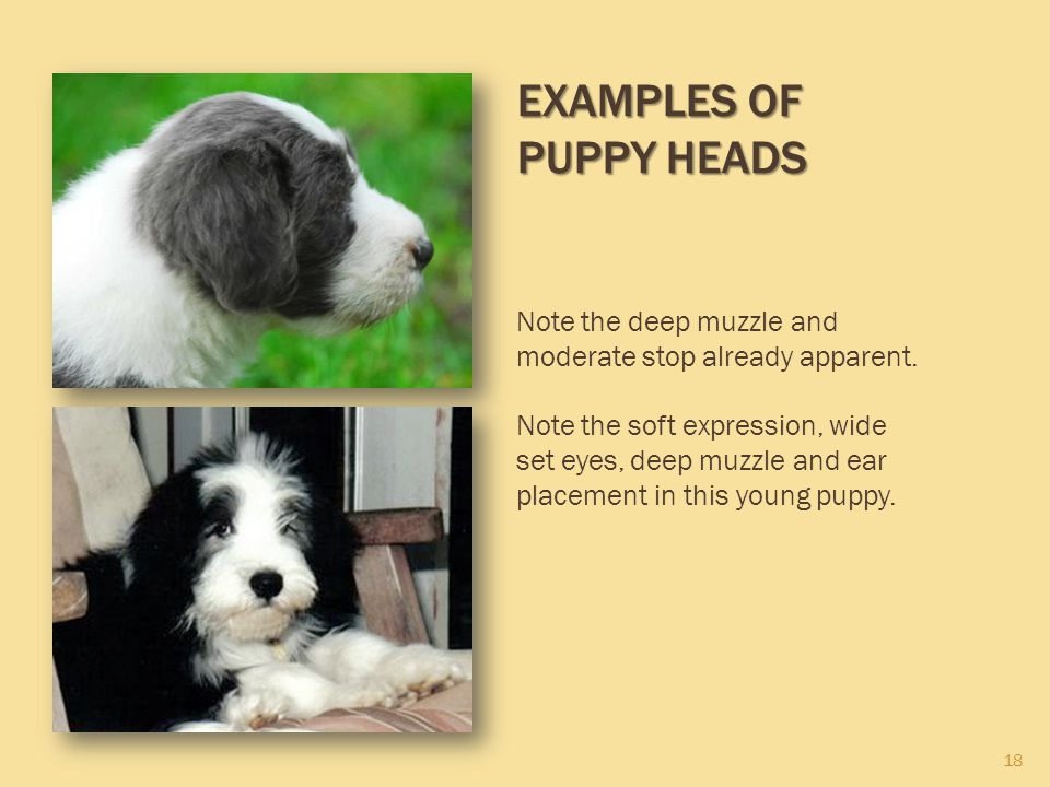 Examples of Puppy Heads