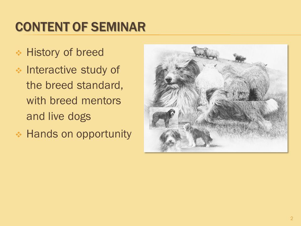 CONTENT OF SEMINAR History of breed