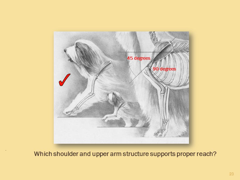 Which shoulder and upper arm structure supports proper reach