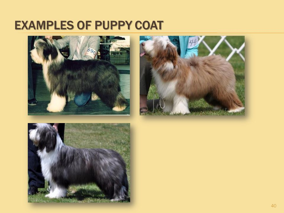 Examples of Puppy Coat
