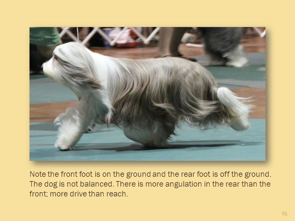 Note the front foot is on the ground and the rear foot is off the ground.