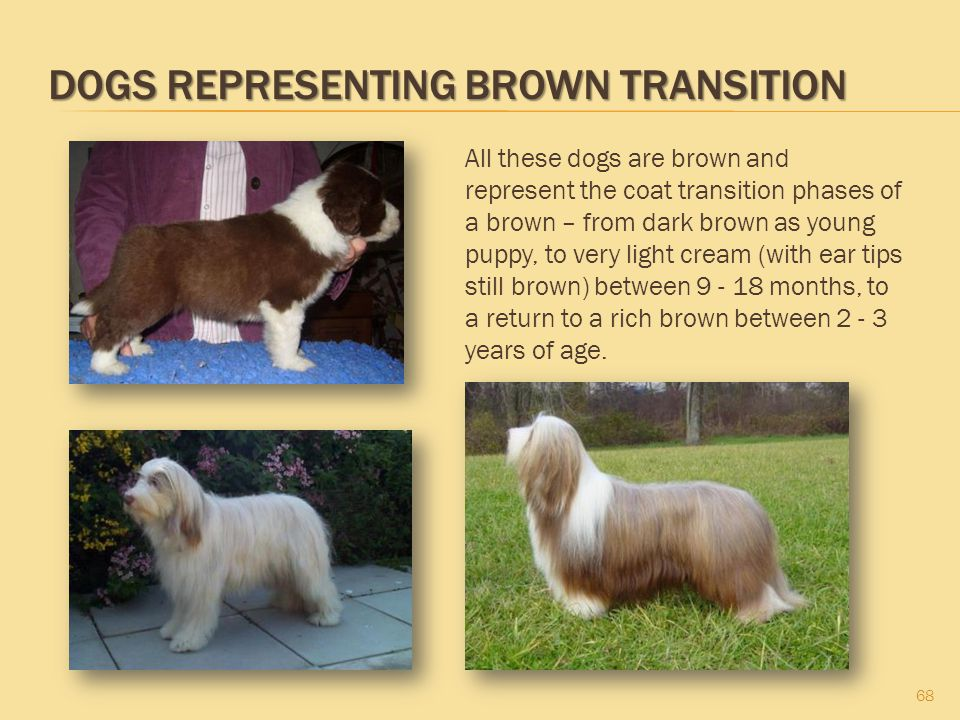 Dogs Representing Brown Transition