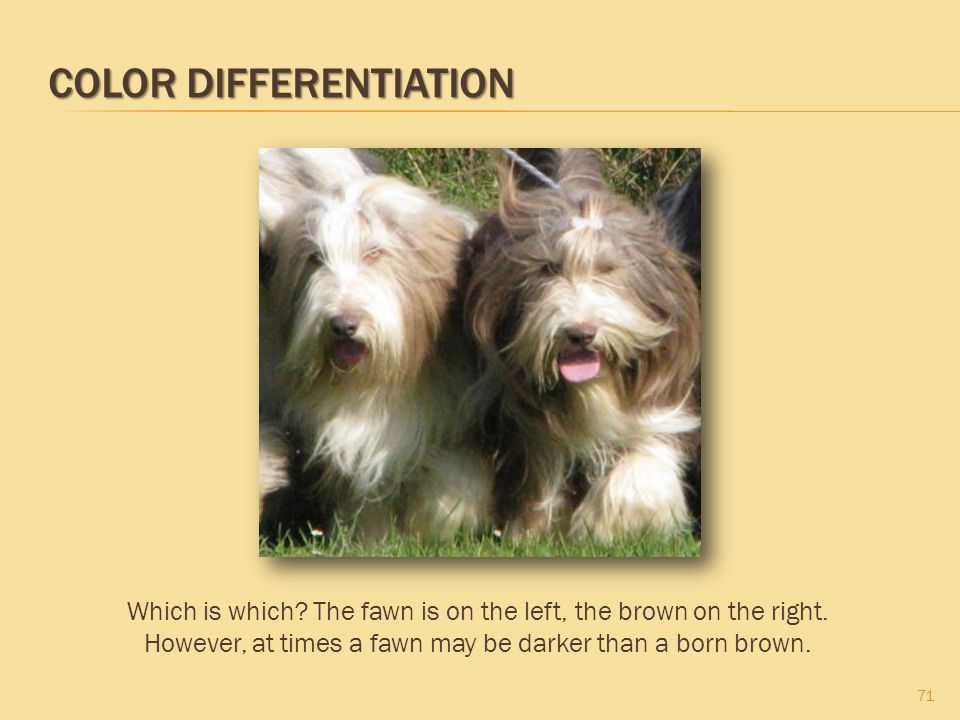 Color Differentiation