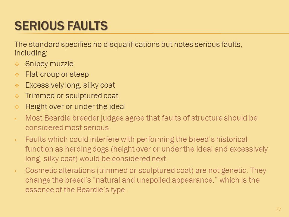 Serious Faults The standard specifies no disqualifications but notes serious faults, including: Snipey muzzle.