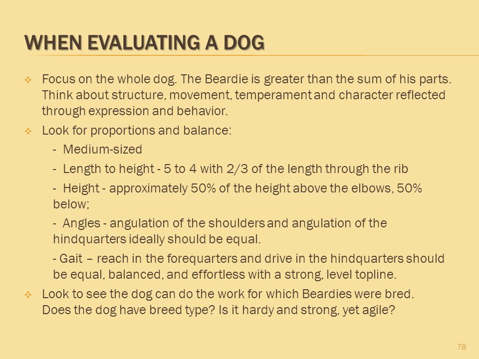 When Evaluating a Dog