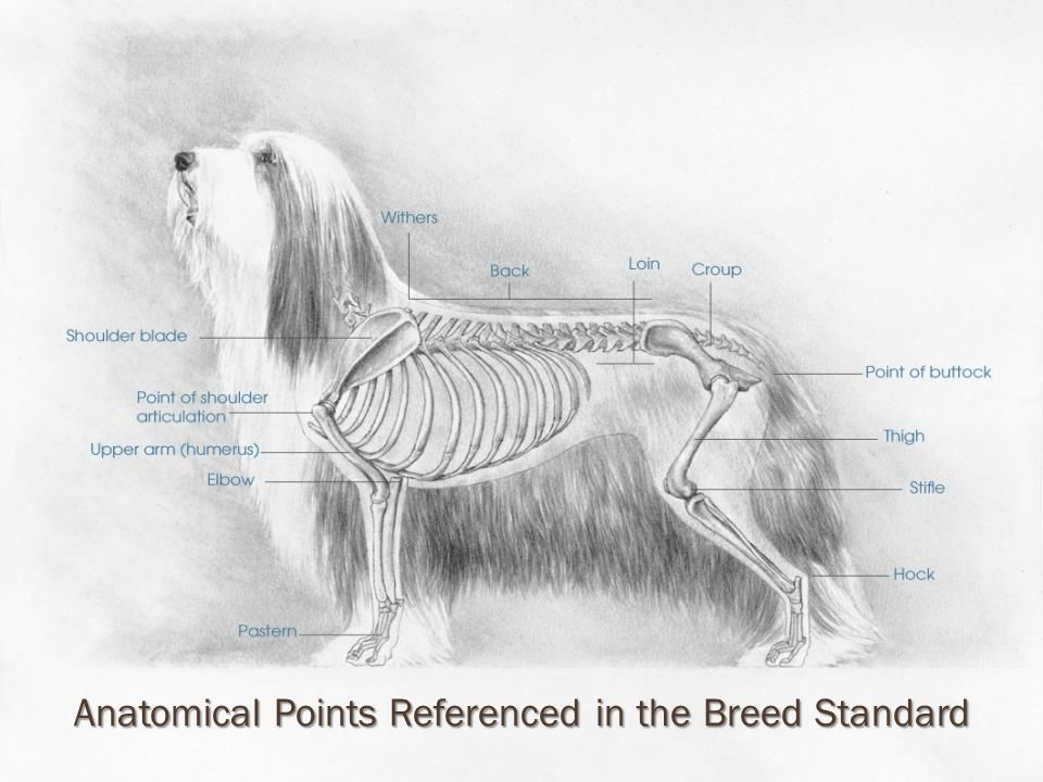 Anatomical Points in the Standard