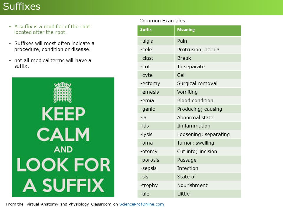 Suffixes Common Examples: