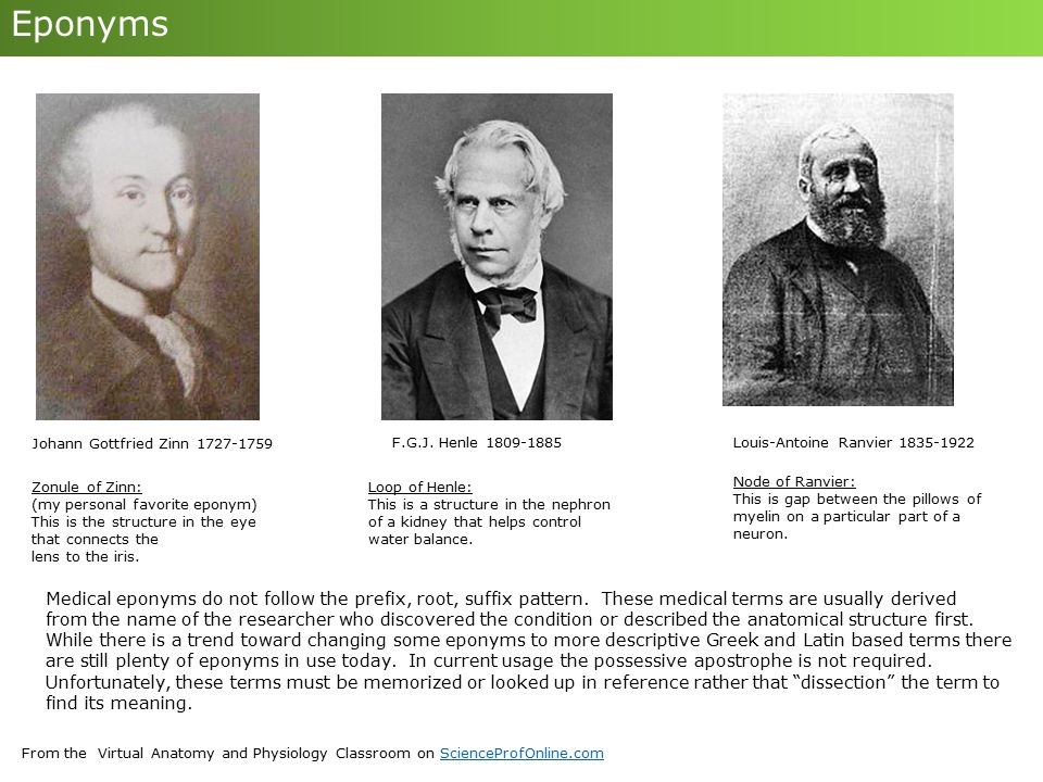 Eponyms Johann Gottfried Zinn 1727-1759. F.G.J. Henle 1809-1885. Louis-Antoine Ranvier 1835-1922.