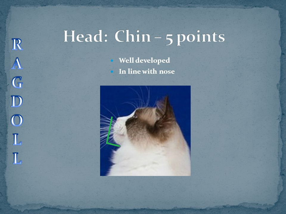 Head: Chin – 5 points R A G D O L Well developed In line with nose