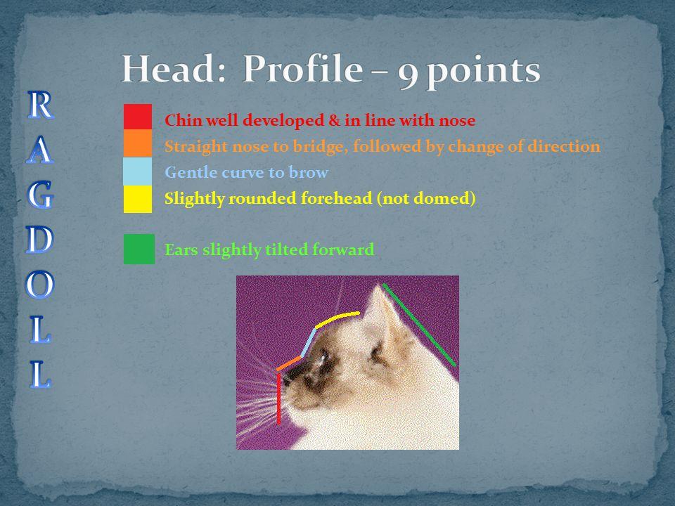 Head: Profile – 9 points R A G D O L