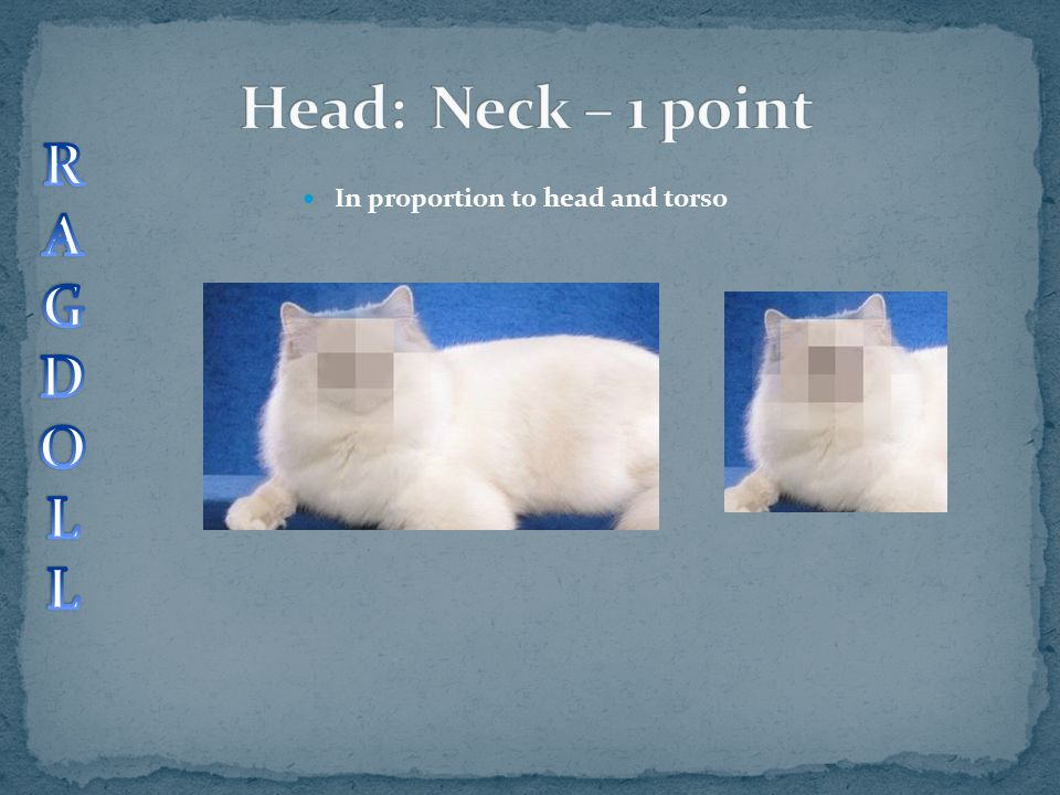 Head: Neck – 1 point R A G D O L In proportion to head and torso