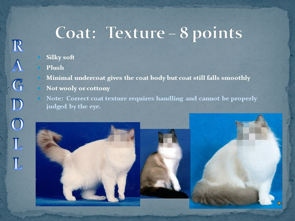 Coat: Texture – 8 points R A G D O L Silky soft Plush
