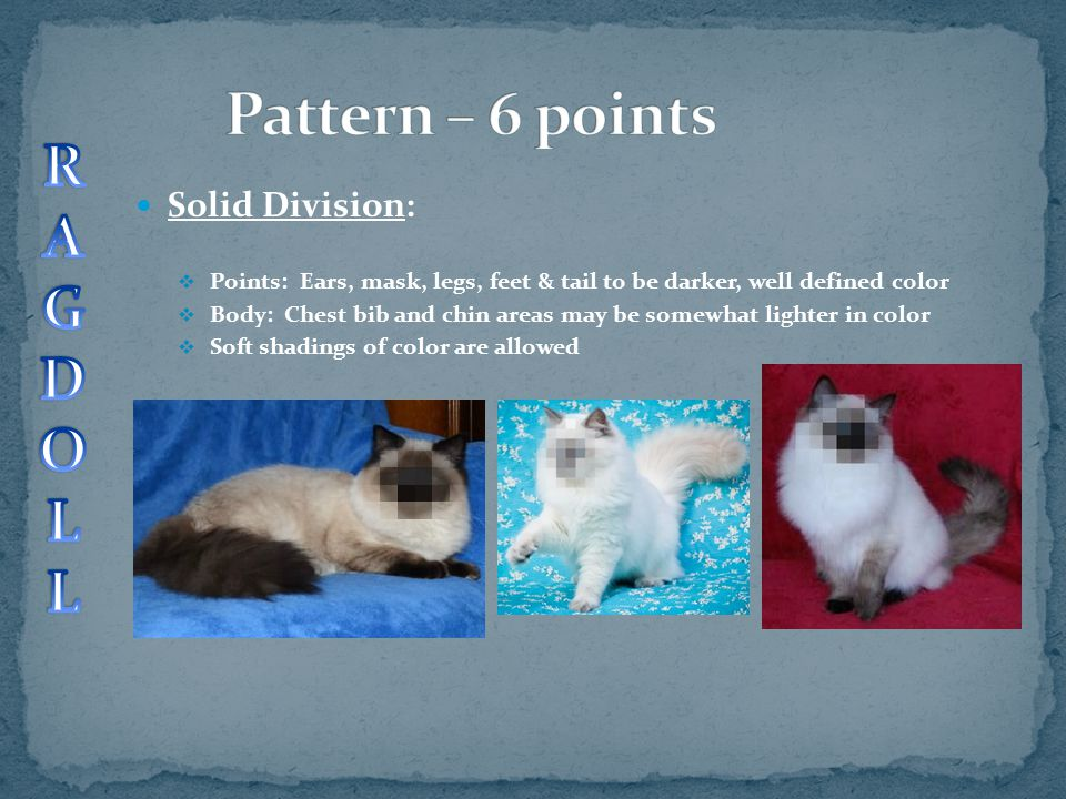 Pattern – 6 points R A G D O L Solid Division: