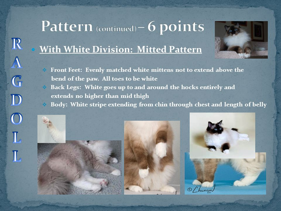 Pattern (continued) – 6 points