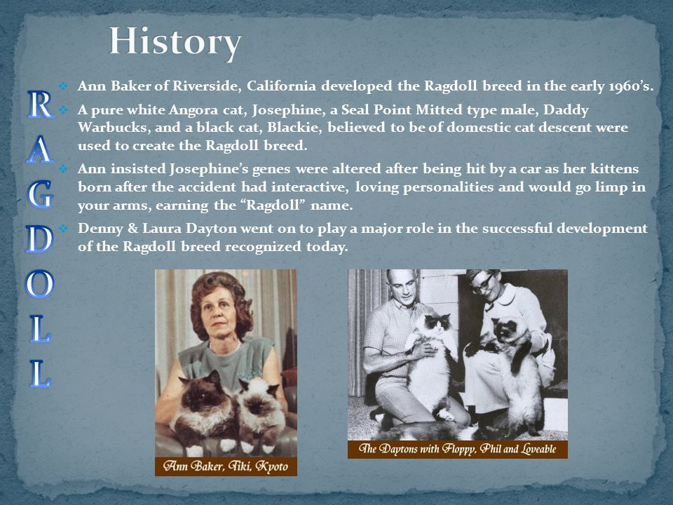 History Ann Baker of Riverside, California developed the Ragdoll breed in the early 1960's.