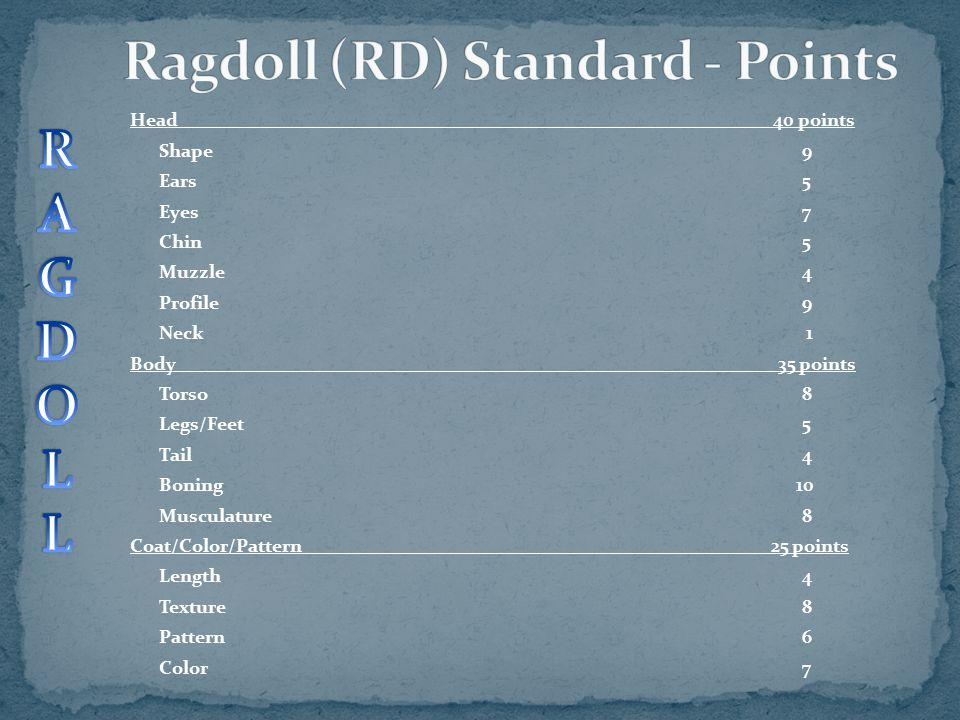 Ragdoll (RD) Standard - Points