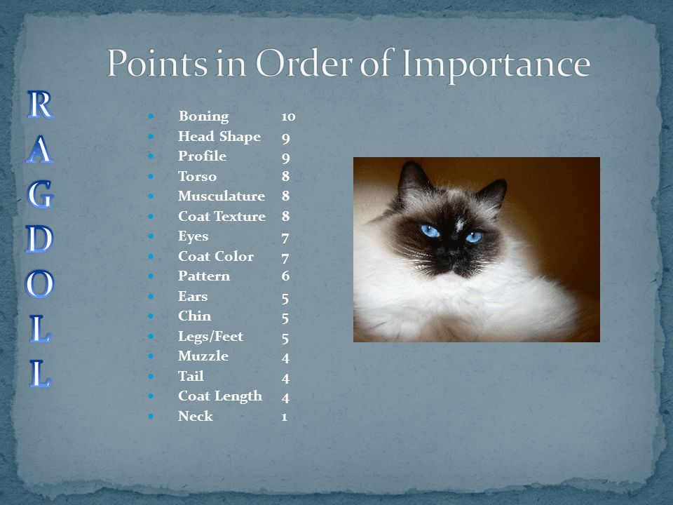 Points in Order of Importance