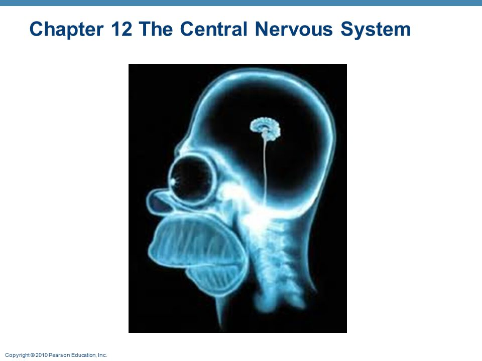 Chapter 12 The Central Nervous System
