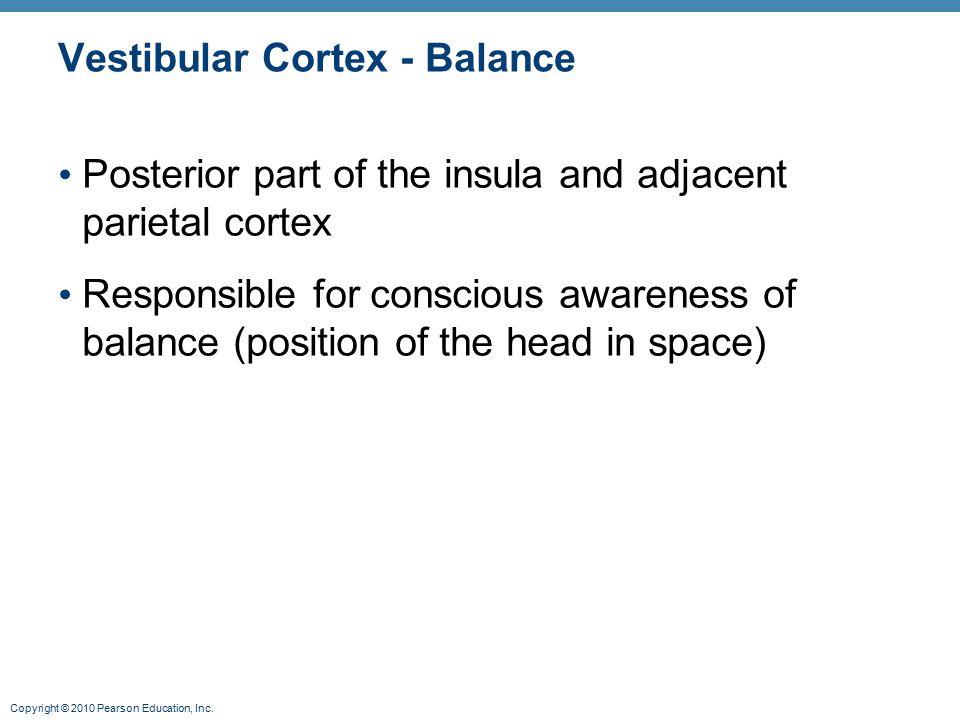 Vestibular Cortex - Balance