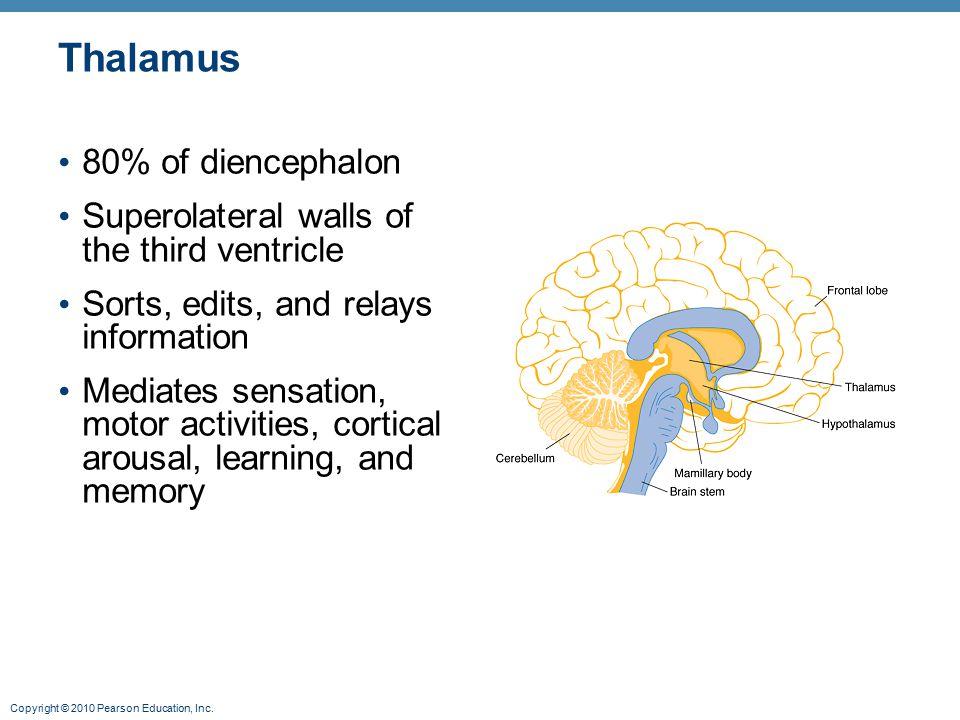 Thalamus 80% of diencephalon