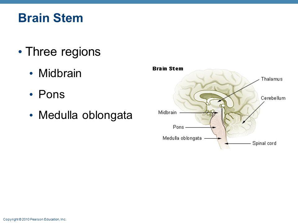 Brain Stem Three regions Midbrain Pons Medulla oblongata