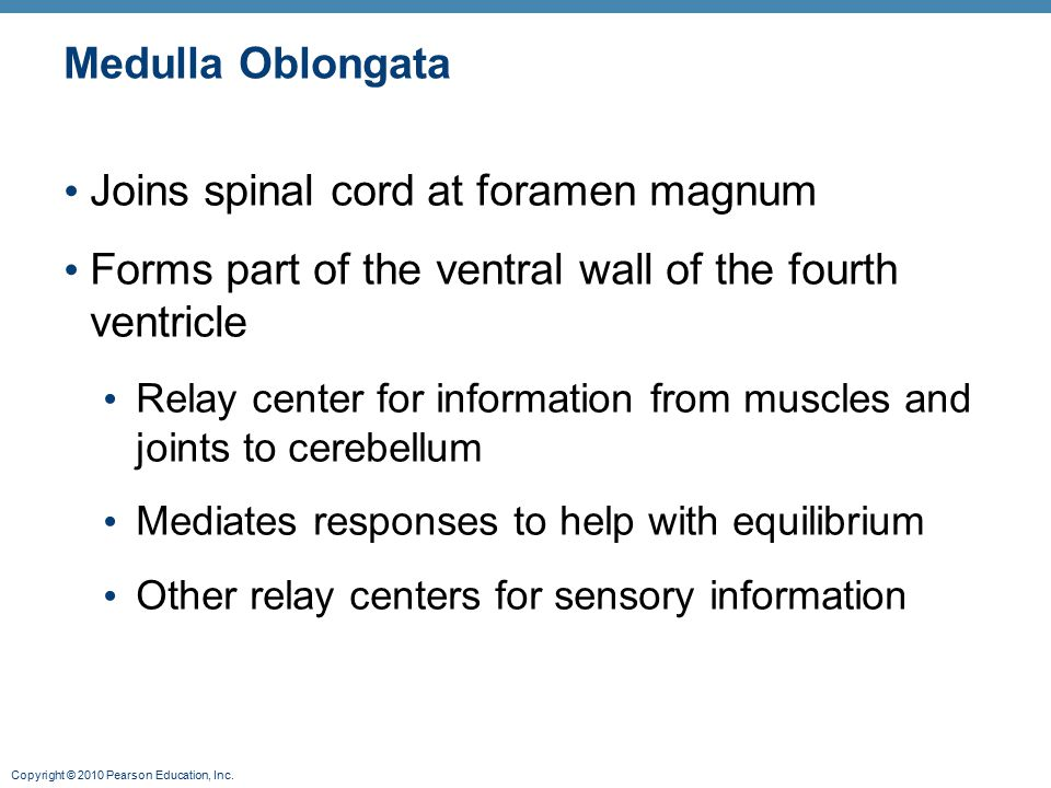 Joins spinal cord at foramen magnum