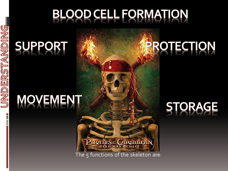 BLOOD CELL FORMATION sUPPORT PROTECTION MOVEMENT STORAGE UNDERSTANDING