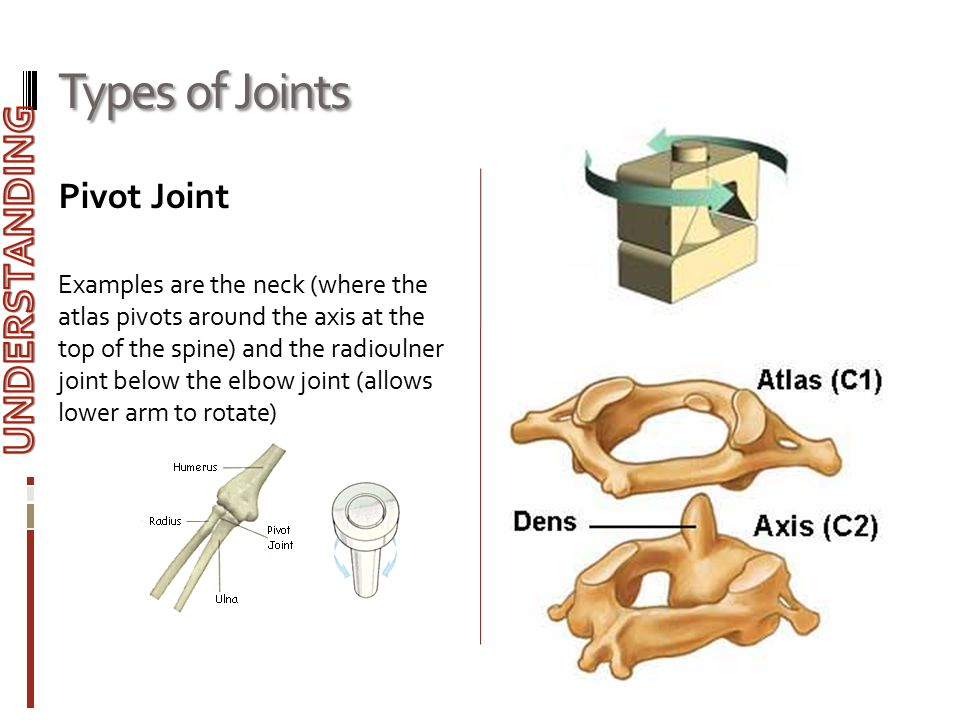 Types of Joints UNDERSTANDING Pivot Joint