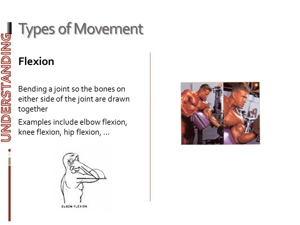 Types of Movement UNDERSTANDING Flexion