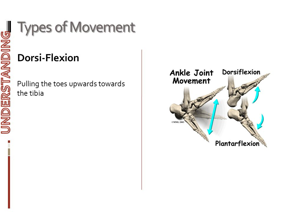 Types of Movement UNDERSTANDING Dorsi-Flexion