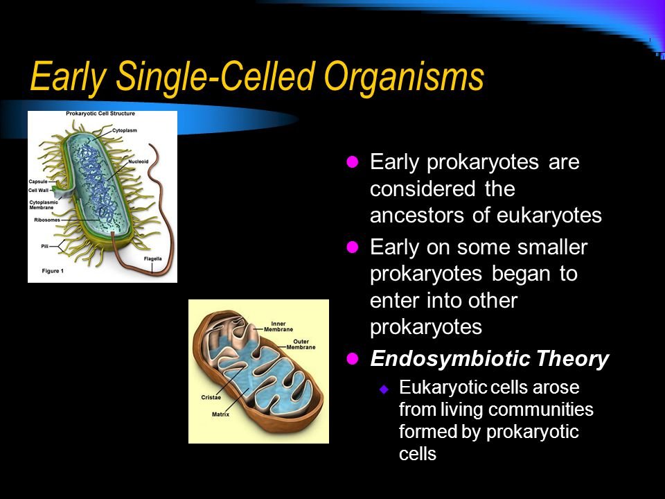Early Single-Celled Organisms