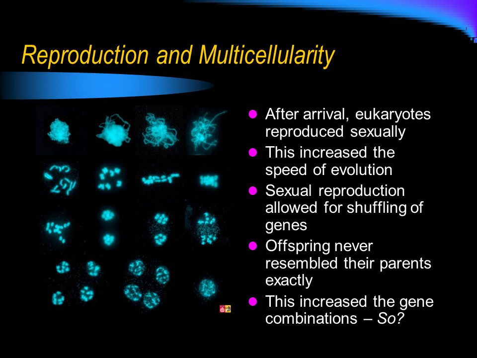 Reproduction and Multicellularity