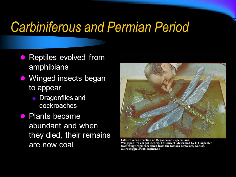 Carbiniferous and Permian Period