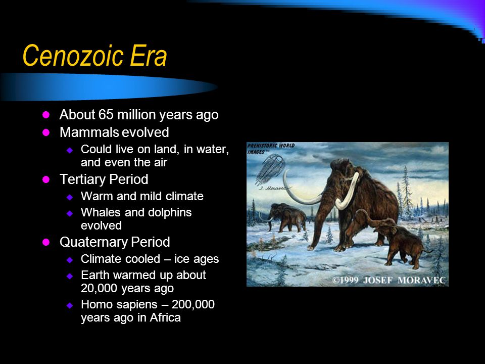 Cenozoic Era About 65 million years ago Mammals evolved