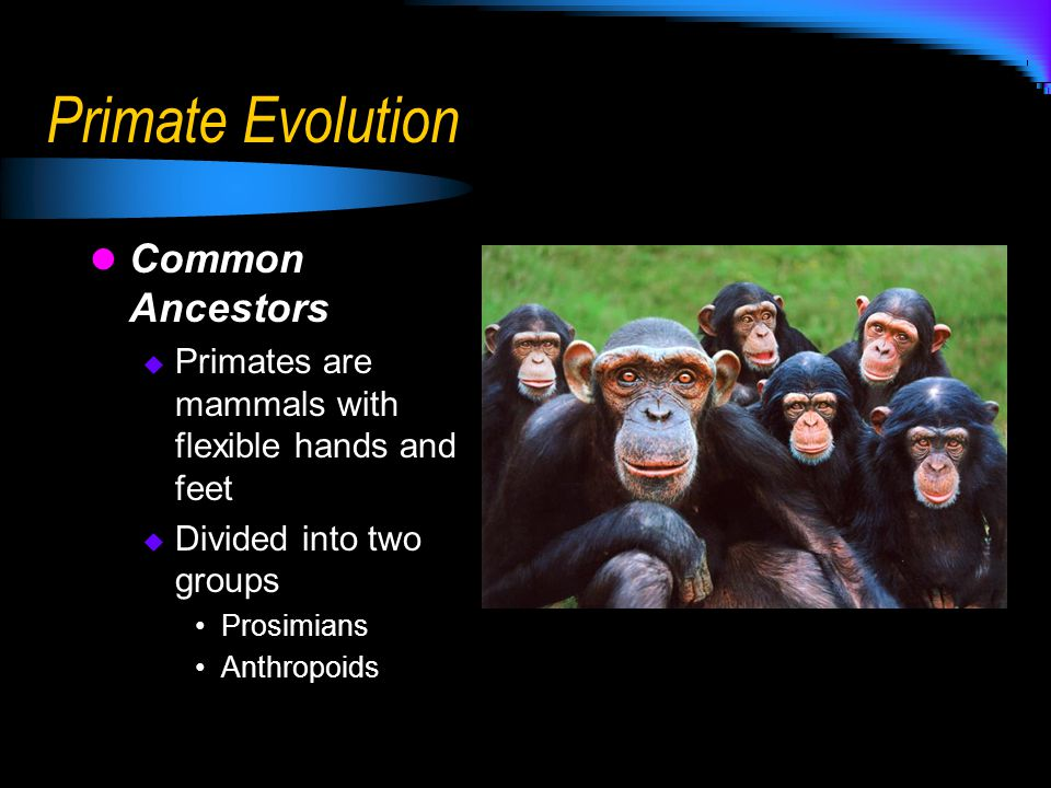 Primate Evolution Common Ancestors