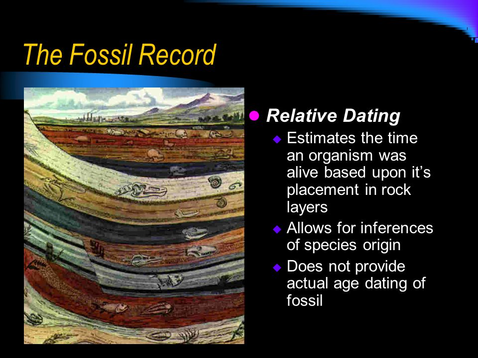 The Fossil Record Relative Dating