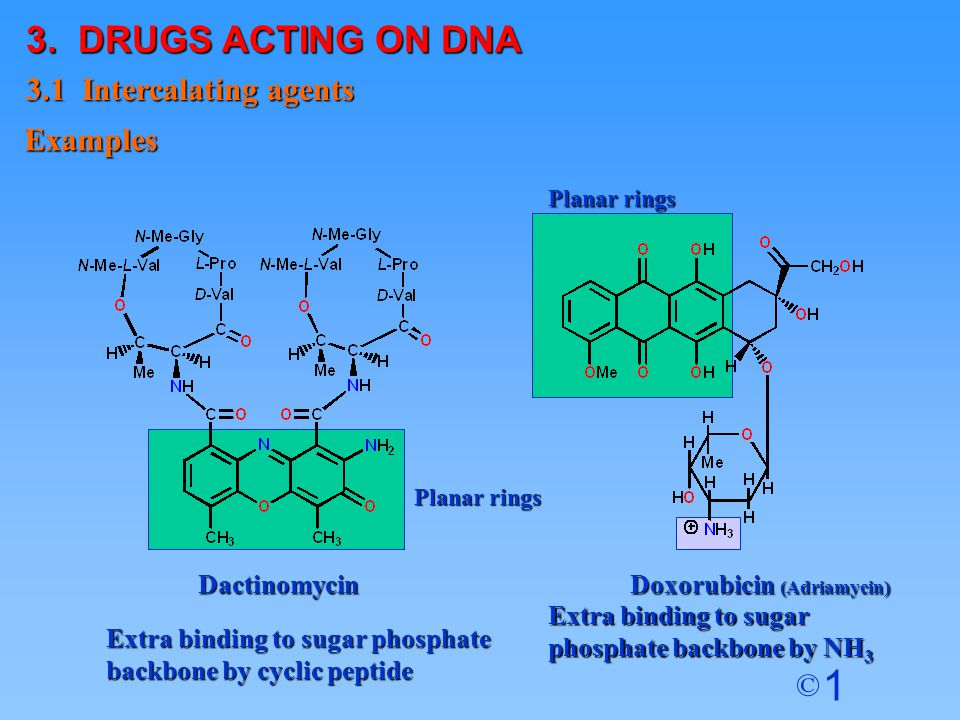 3. DRUGS ACTING ON DNA 3.1 Intercalating agents Examples
