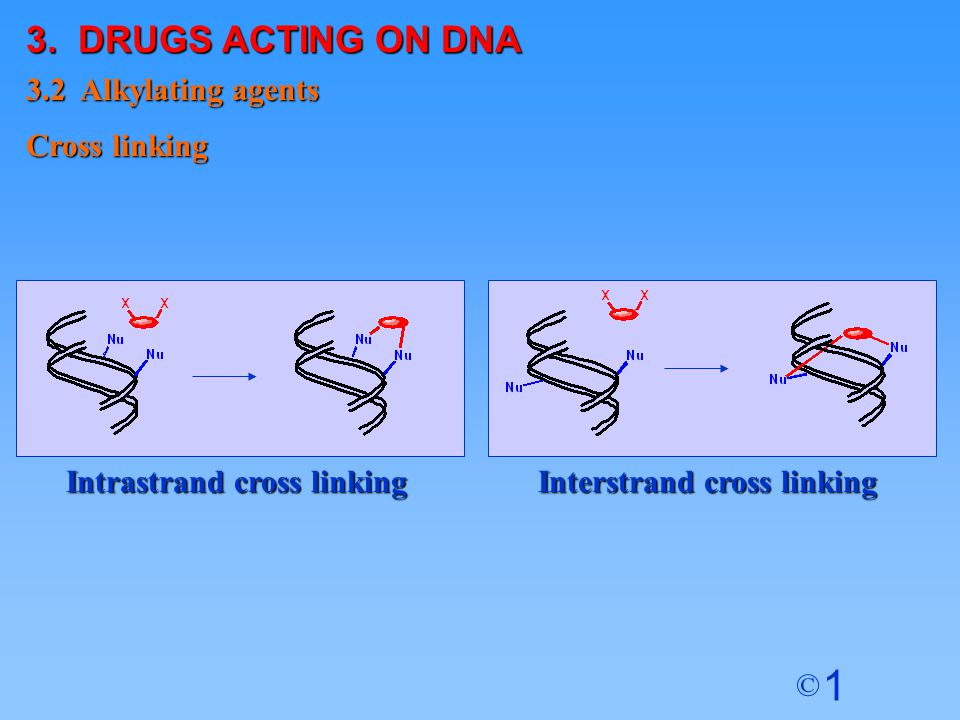 3. DRUGS ACTING ON DNA 3.2 Alkylating agents Cross linking