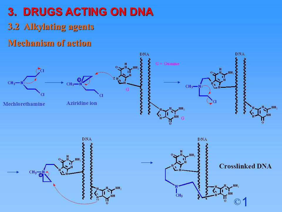 3. DRUGS ACTING ON DNA 3.2 Alkylating agents Mechanism of action